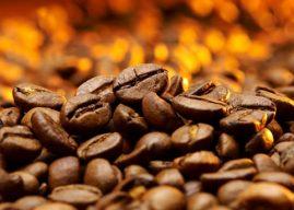 Canadá investe na expansão de café no Brasil