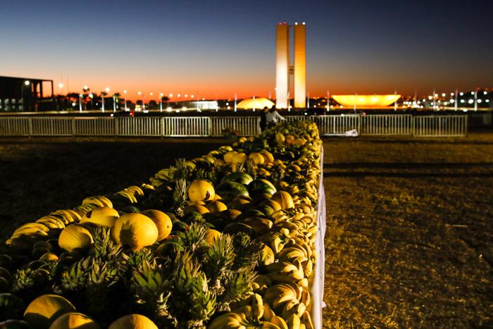 Mesa de 240 metros de comprimento com 18,8 toneladas de frutas / Foto: CNA