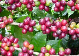 Contribuição Sindical fortalece conquistas para o setor agro capixaba