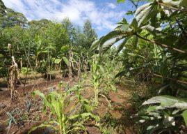 Diversificação da produção também representa maior cuidado com o solo