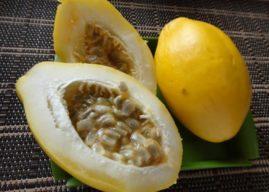 Primeira cultivar de maracujá-doce é lançada