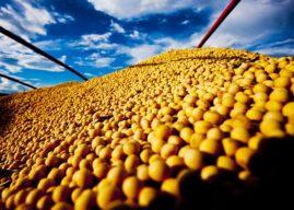 Balança comercial do agronegócio fica positiva em US$ 7,3 bi em outubro