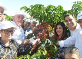 Ministra da Agricultura dá início à colheita do café Conilon no Espírito Santo