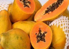 Mamão/Cepea: Fruta alcança recorde no volume mensal exportado